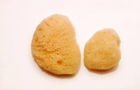 sponges_M_S_large